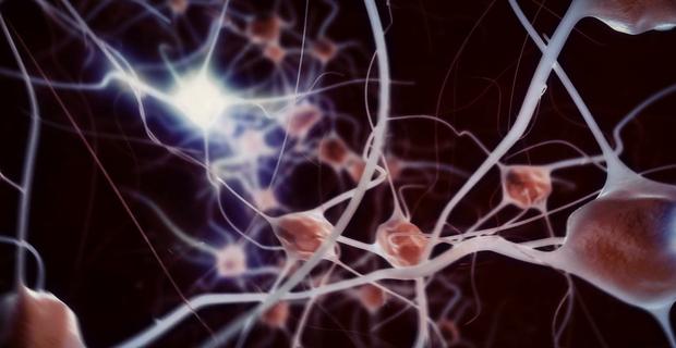 brain-neural-network