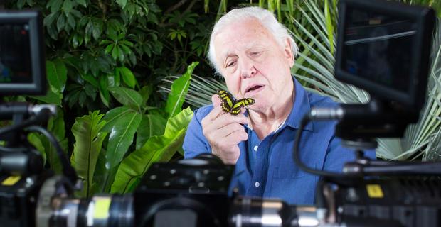 David-Attenborough-camera