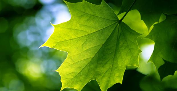 leaf-photosynthesis