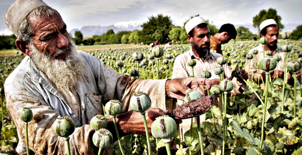 Afghan-farmer